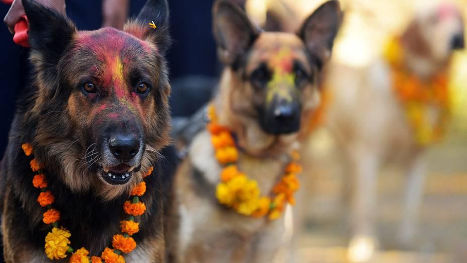 Cães da polícia nepalesa foram pintados e enfeitados com colares comemorativos durante o festival Diwali em Katmandu