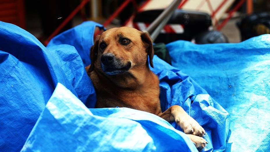 Cachorros e seus donos na região da Cracolândia