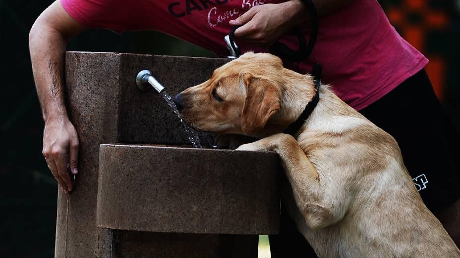 Cachorro toma água em bebedouro no parque do Ibirapuera