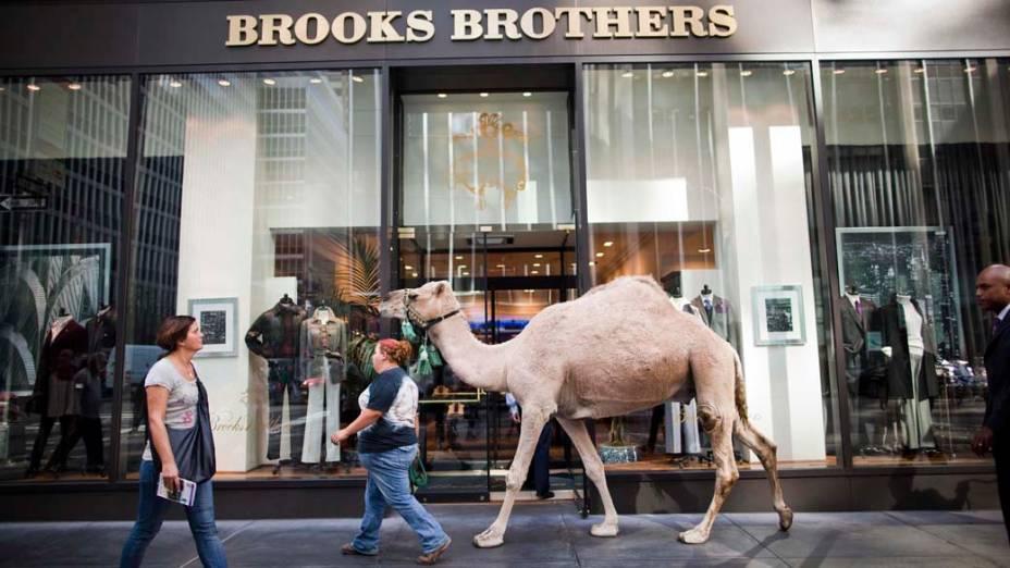 Dromedário, que participará de espetáculo natalino, caminha pela Sexta Avenida após sessão de fotos para a imprensa, em Nova York