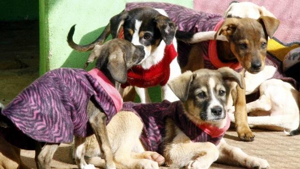 """Para proteger os animais do frio, aSociedade Protetora dos Animais de Apucarana começou a campanha do """"AUgasalho"""""""