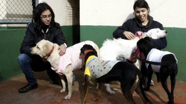Uma veterinária e três tratadores se dividem para cuidar dos animais que são divididos em alas