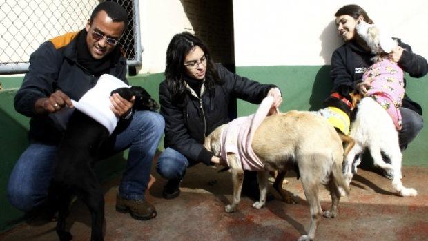 Os animais dos canis são recolhidos das ruas e por motivos de maus tratos