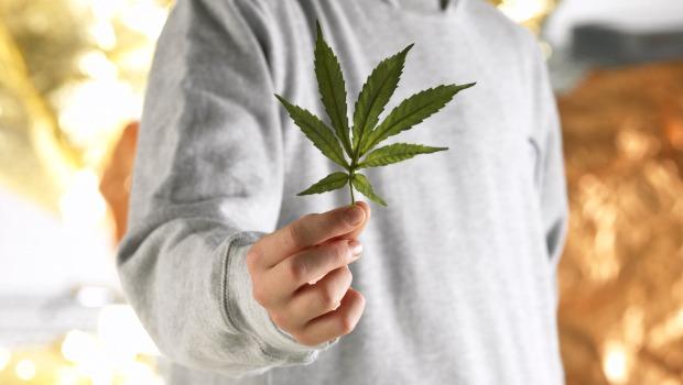 cannabis maconha