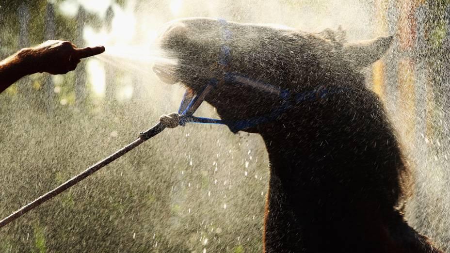 Cavalo é preparado para competição em Sidney, na Autralia