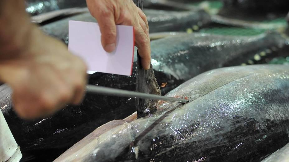 Homem perfura o Atum para ver a textura de sua carne