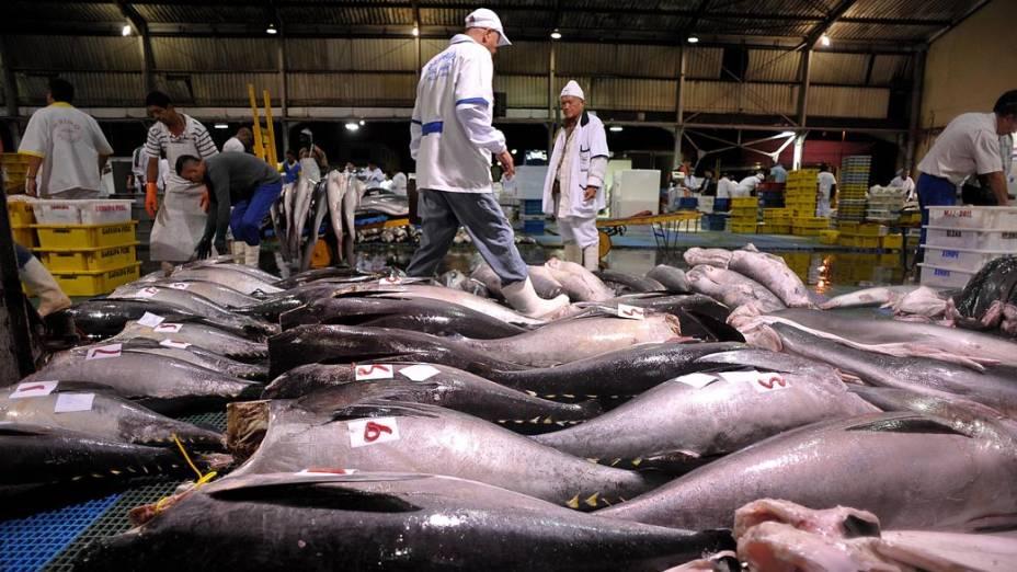 A CEAGESP comercializa peixes de água doce, salgada e de cativeiro, nacionais e estrangeiros