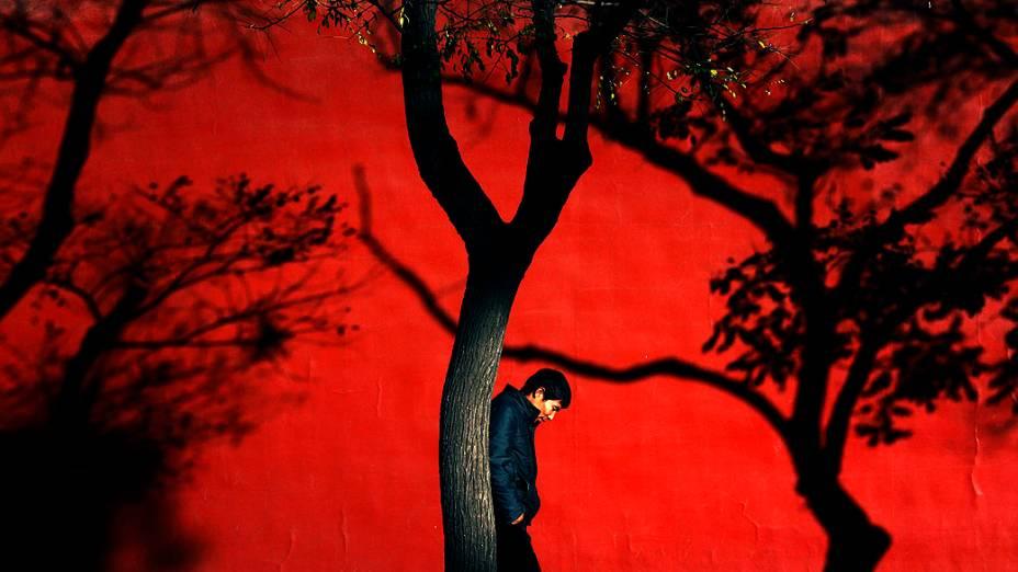 Homem caminha entre árvores em um dia ensolarado, na cidade de Pequim (China)