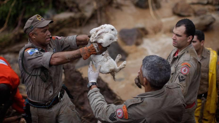 Bombeiros resgatam coelho entre os destroços de casa arrastada pela chuva em Teresópolis, Rio de Janeiro - 13/01/2011