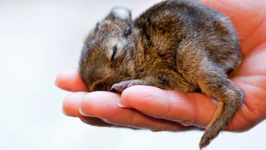 Filhote de coelho é encontrado por funcionária em zoológico da Alemanha