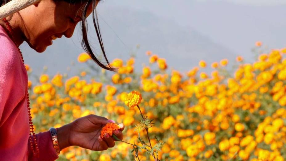 Garota colhe flores para fabricar guirlandas usadas no festival Diwali em Ramkot, Índia