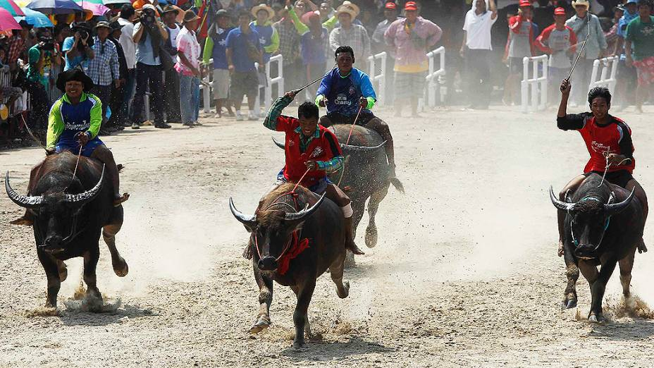 Competidores durante corrida anual de búfalos na província de Chonburi, ao sul de Bangcoc, na Tailândia