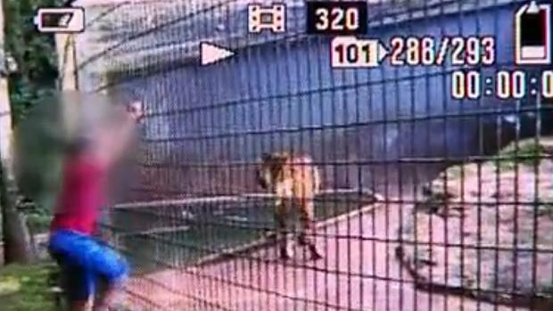 crianca-tigre-video-original.jpeg