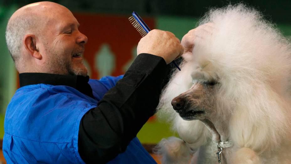 """Poodle é tratado pelo dono durante a """"Crufts dog show""""em Birmingham"""