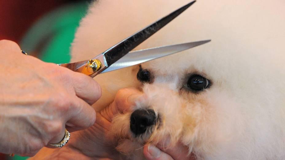"""Cão da raça Bichon Frise tem o pelo aparado durante a """"Crufts dog show"""" em Birmingham"""
