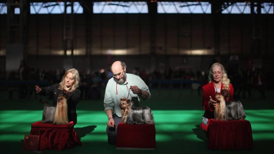 """Cuidadores de Yorkshires apresentam seus cães para competição durante o """"Crufts dog show"""" em Birmingham"""