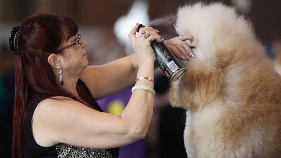 """Criadora aplica spray em seu Poodle durante a """"Crufts dog show"""" em Birmingham"""