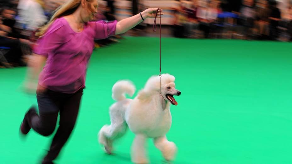 """Poodle desfila durante a """"Crufts dog show"""" em Birmingham"""