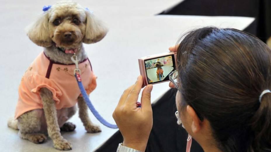 Em Tóquio, no Japão, acontece feira de moda para animais de estimação