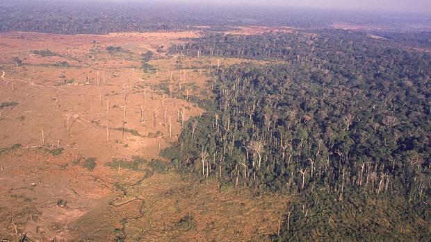 desmatamento-620-original.jpeg