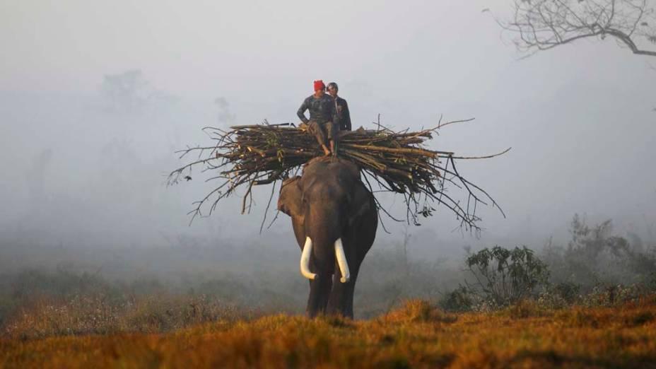 Homens montados em elefante retornam após a colheita de alimentos no Parque Nacional Chitwan em Sauraha, Nepal