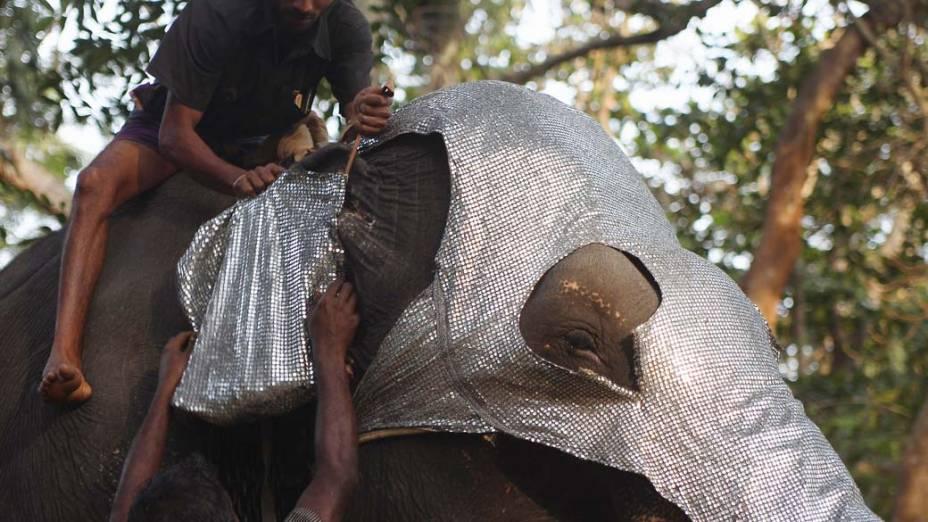 """Homens preparam elefante para o festival """"Navam Perehara"""" no Sri Lanka"""