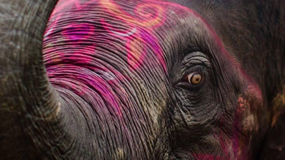 Elefante durante a feira Sonepur Mela em Sonepur, perto de Patna, Índia