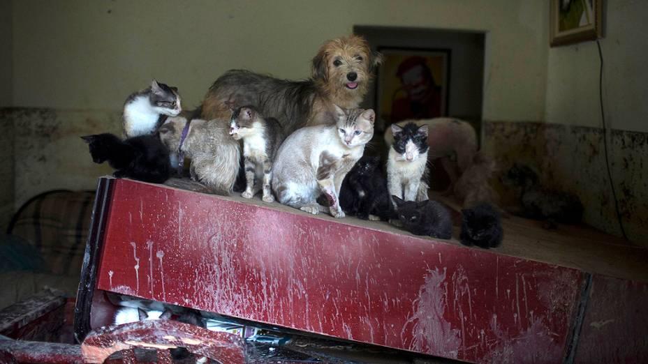 Animais se protegem em casa atingida pela enchente em Xerém, na Baixada Fluminense