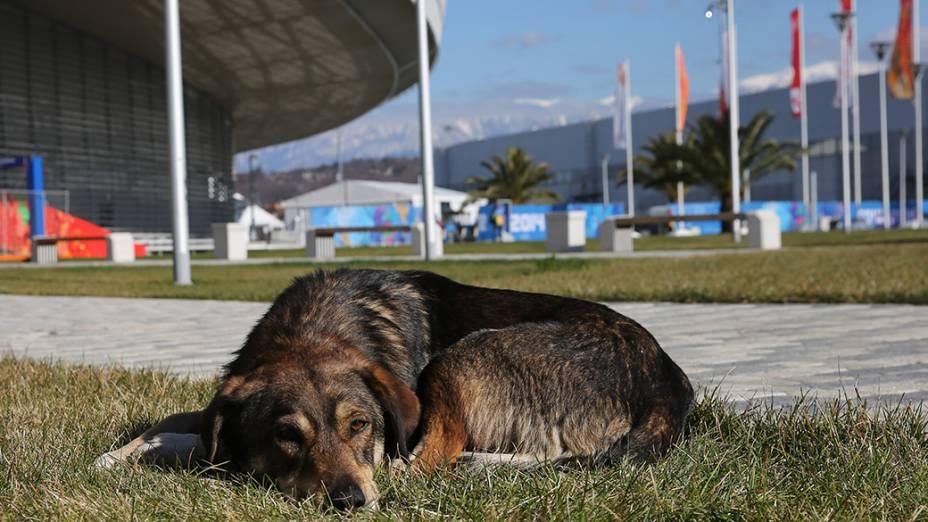 Com canis e abrigos cheios, 300 animais são sacrificados por mês