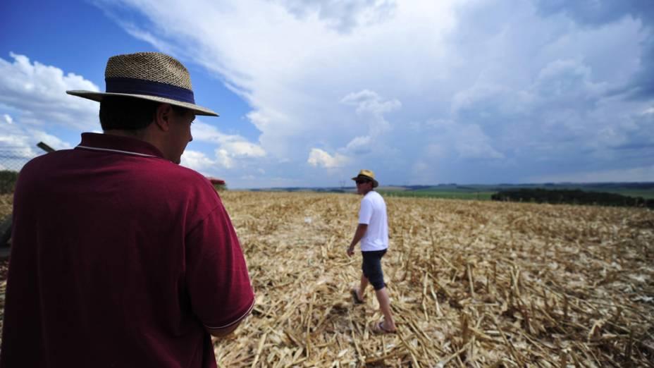 Lavoura de milho durante estiagem no Rio Grande do Sul