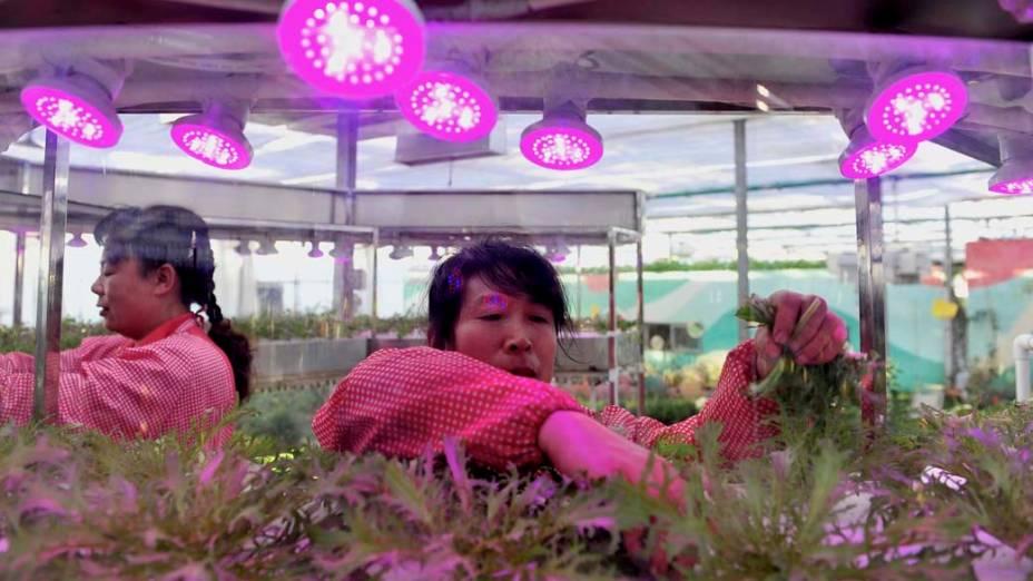 Estufa de vegetais em Shengyang, China