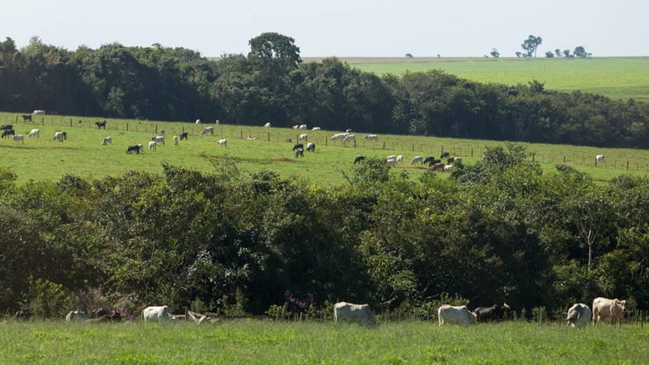 Atividade pecuária às margens da BR163, região de Bandeirantes (MS)