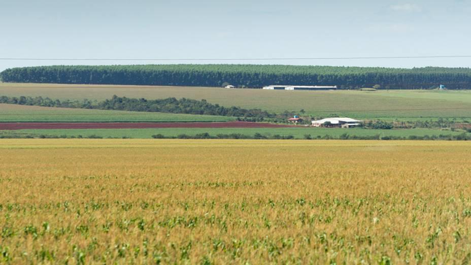 Atividade agrícola às margens da BR163, região de Bandeirantes (MS)