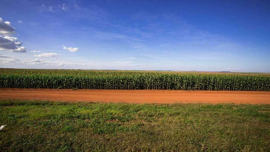 Expedição Veja. Na foto plantação de milho, na região de Coxim (MS)