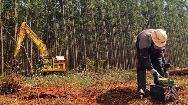 Expedição VEJA - Homem trabalha na extração de madeira para a produção de celulose