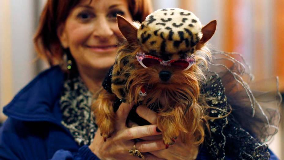"""Cão da raça Yorkshire Terrier durante o 136º Show de Cães do Clube """"Westminster Kennel"""" em Nova York"""