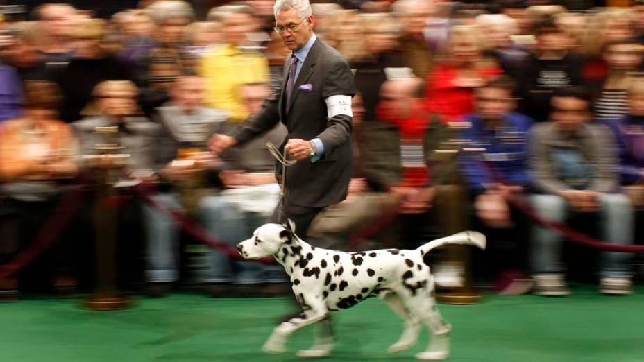 """Dálmata e seu treinador durante o 136º Show de Cães do Clube """"Westminster Kennel"""" em Nova York"""
