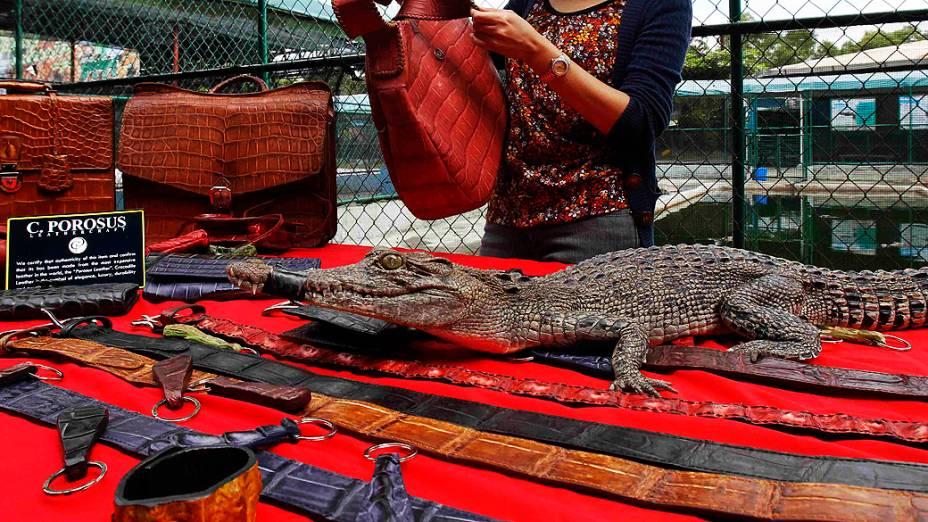 Jacaré vivo é exibido ao lado de bolsas e outros acessórios de couro feitos com a pele do animal. Os artigos são vendidos em uma fazenda de jacarés nas Filipinas