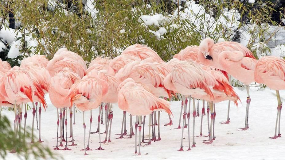 Flamingos em zoológico de Zurique, Suíça