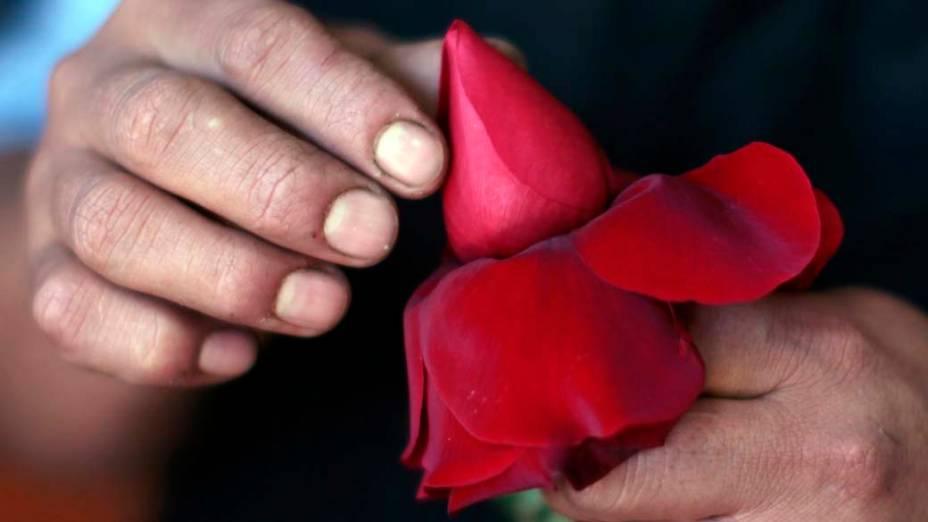 Florista prepara botão de rosa para vendas do Dia dos Namorados em Los Angeles, Estados Unidos