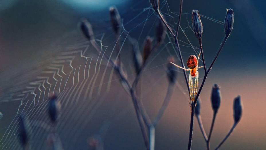 Uma aranha constroi sua teia em uma planta, na Bulgária