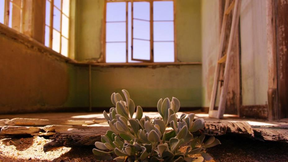 Planta cresce debaixo do assoalho de uma casa em Kolmanskop Ghost Town, na Namíbia