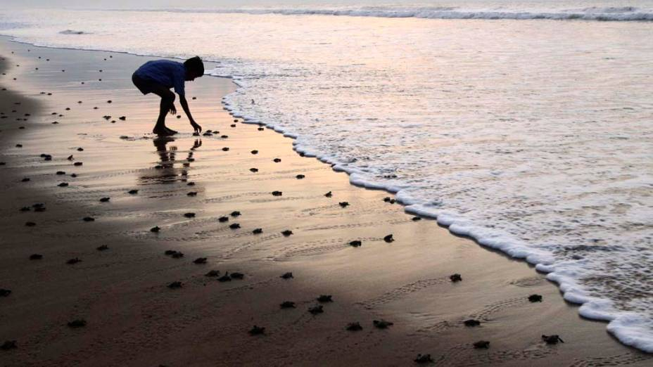 Na Índia, garoto na praia de Ganjam observa tartarugas recém-nascidas