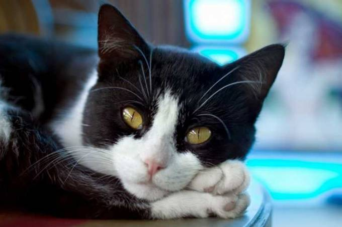 gato-3-getty-original.jpeg