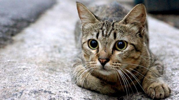 Gato concentrado