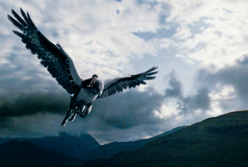 Harry Potter (Daniel Radcliffe) monta em Bicuço