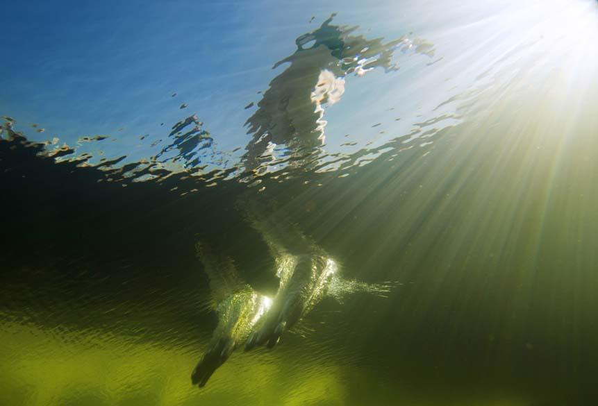 Em São Petersburgo, Rússia, homem mergulha nas águas geladas do rio Neva que atingiu os 3 graus Celsius