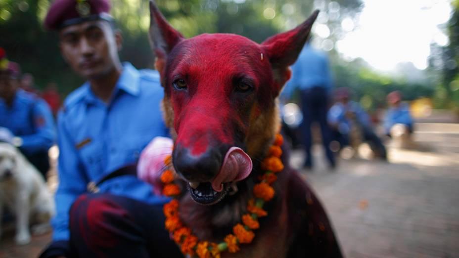 Cão policial nas celebrações do Tihar, na Academia de Polícia do Nepal, em Kathmandu. Hindus nepaleses comemoram o Tihar, também chamado de Diwali, é um festival que simboliza a destruição das forças do mal