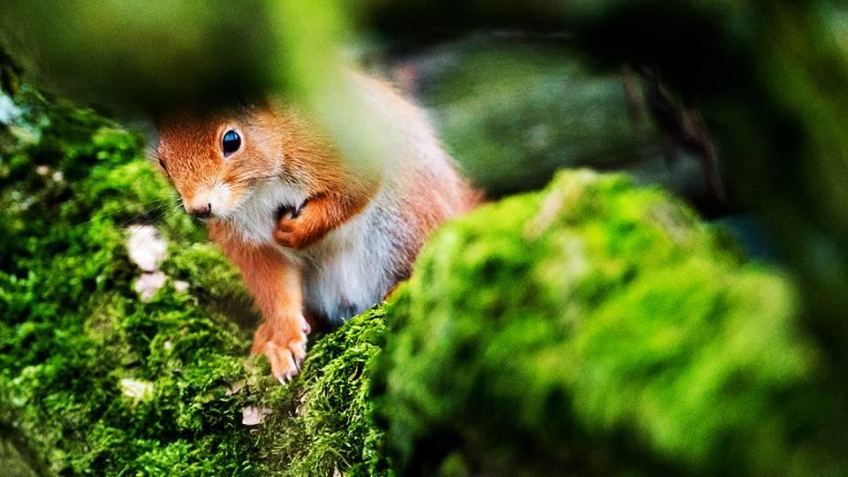 Esquilo é fotografado em um parque de Hanover, na Alemanha