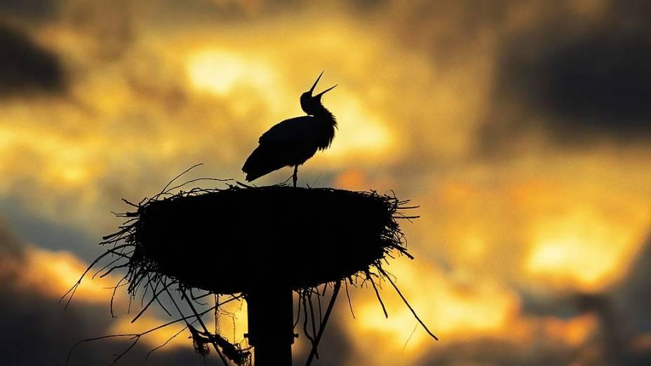 Pássaro é fotografado em ninho, na Alemanha
